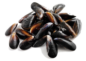 Mussels Marinated