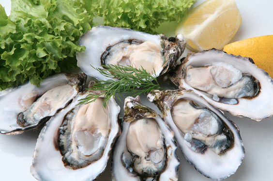 NZ Oysters